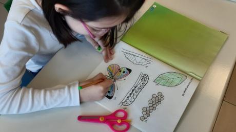 Eryaman Okyanus Koleji İlkokul Kademesi 2. Sınıf Öğrencileri Main Course Dersinde Kelebeğin Yaşam Döngüsünü Öğrendi
