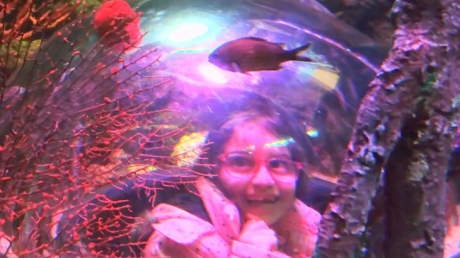 1.Sınıflar Sea Life'ta